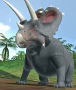 Anchiceratops dbwc