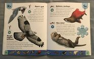 Polar Animals Dictionary (20)