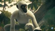 Vervet Monkey in Ancestors The Humankind Odyssey