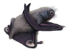 Anurognathus-pteros