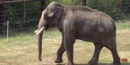 Oklahoma City Zoo Elephant