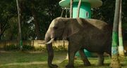 Life.of.Pi Elephant