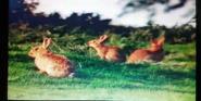 Animal Show Rabbits