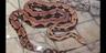 Columbus Zoo Python