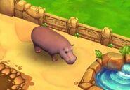 Hippopotamus-zoo-2-animal-park