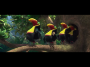 IMG toucans