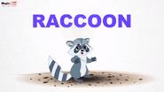 MagicBox Raccoon