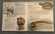My First Book of Animals from A to Z (24)
