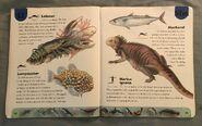 Ocean Life Dictionary (14)