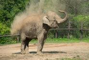 Photo-detail-asia-asian-elephants-6