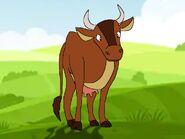 Rileys Adventures Jersey Cattle