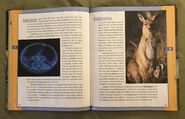Scholastic Encyclopedia Of Animals (27)