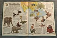 The Animal Atlas (22)