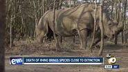 Last Rhinoceros Alive