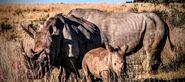Rhino-family-720x320
