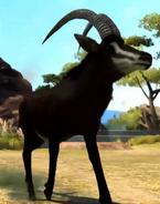 Sable-antelope-zootycoon3