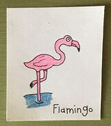Flamingo Begins With F