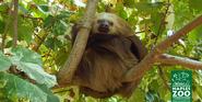 Naples Zoo Sloth