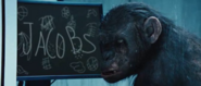 Rise of the Planet of the Apes koba writes