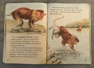 Awesome Animals (Road to Reading) (9)
