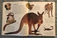 DK Encyclopedia Of Animals (25)