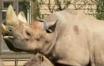 MAD Rhino