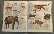 Macmillan Animal Encyclopedia for Children (26)