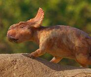 Mikaela The Pachyrhinosaurus