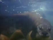 MMHM Otter