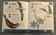Polar Animals Dictionary (25)