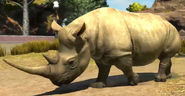 South-western-black-rhinoceros-zootycoon3