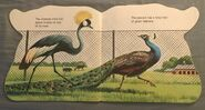 The Zoo Book (7)