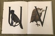 Animal Alphabet (Bert Kitchen) (12)