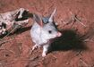 Bilby howard hughes big