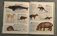 Macmillan Animal Encyclopedia for Children (33)