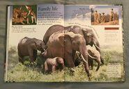 Mammals (Eye Wonder) (3)