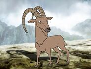 Rileys Adventures Alpine Ibex