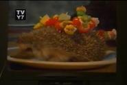 Scout's Safari Hedgehog