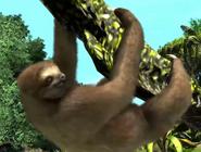 Brown-throated-three-toed-sloth-zootycoon3