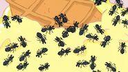 EEnE Ants 2