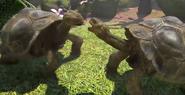 Galapagos-giant-tortoise-zootycoon3