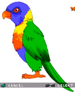 Lorikeet ty-the-tasmanian-tiger