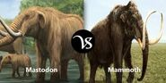 Mastodon vs Mammoth