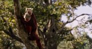 TJB Giant Squirrel