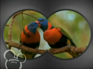 Little Einsteins Lorikeets