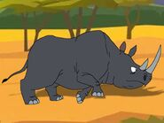 Rileys Adventures South Western Black Rhinoceros