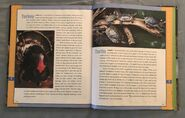 Scholastic Encyclopedia Of Animals (56)