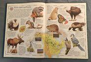 The Animal Atlas (2)