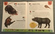 Weird Animals Dictionary (21)