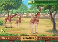 ABC Mouse Giraffes